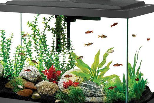 8 Cara Membersihkan Kaca Aquarium Berkerak dan Berlumut